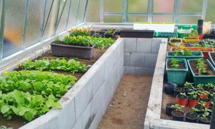 Máme skleník. Konečně!