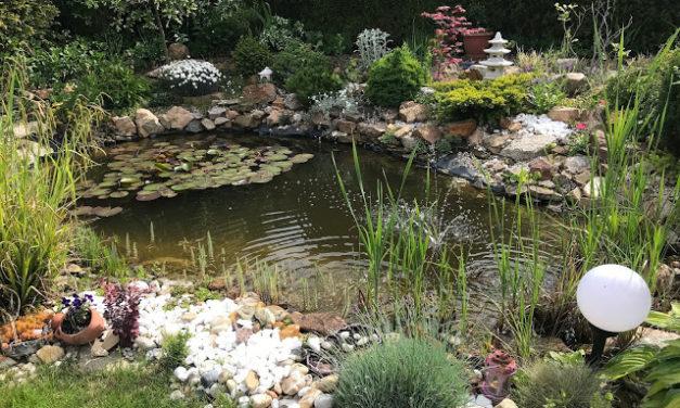 Jezírko, nakvétající rododendrony a