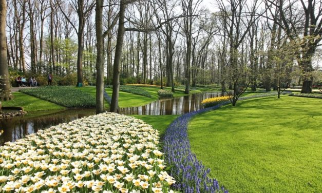 Park Keukenhof a květinová pole /Nizozemí