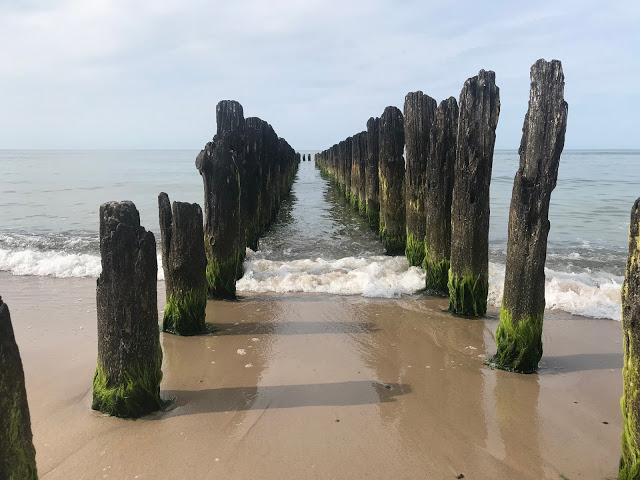 U moře… aneb cestování se psem