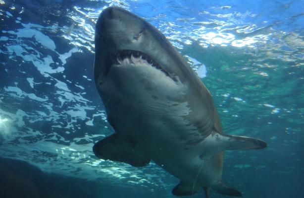 15 člověku nejnebezpečnějších tvorů na planetě