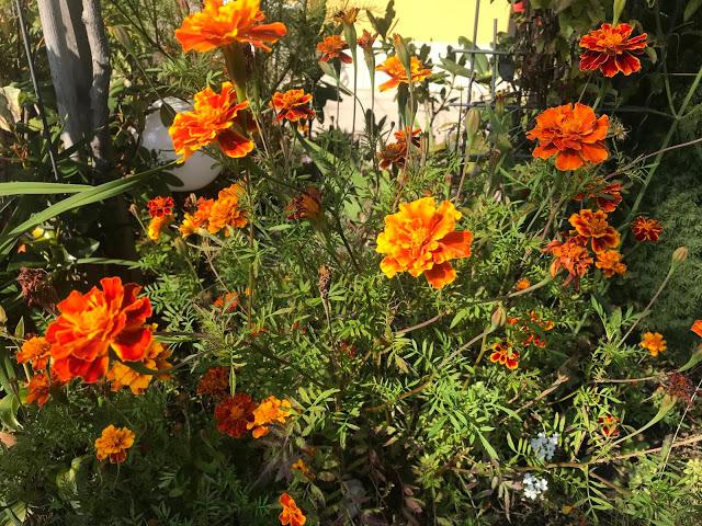 Oranžová barva…
