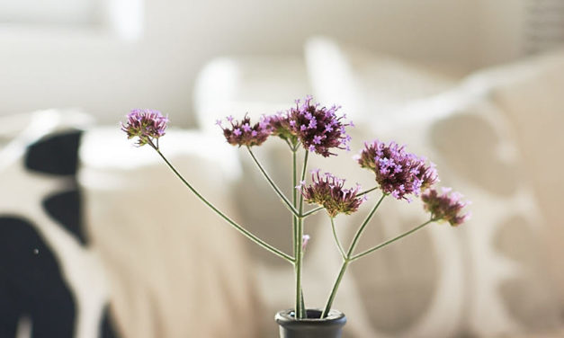 Verbena a jiné podzimní kytky v interiéru